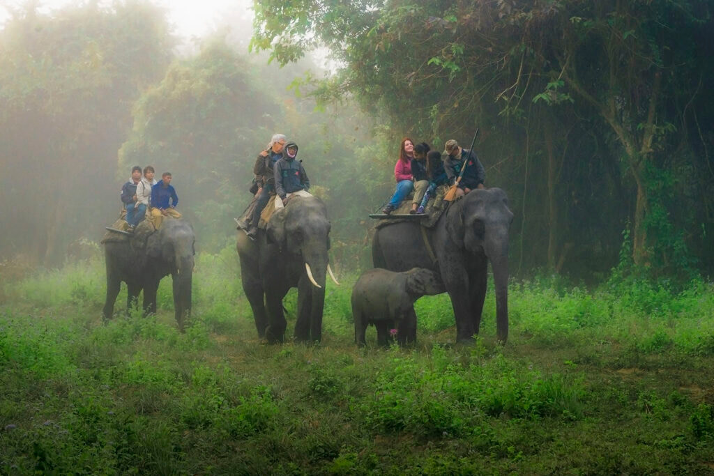 A still from Kaziranga National Park