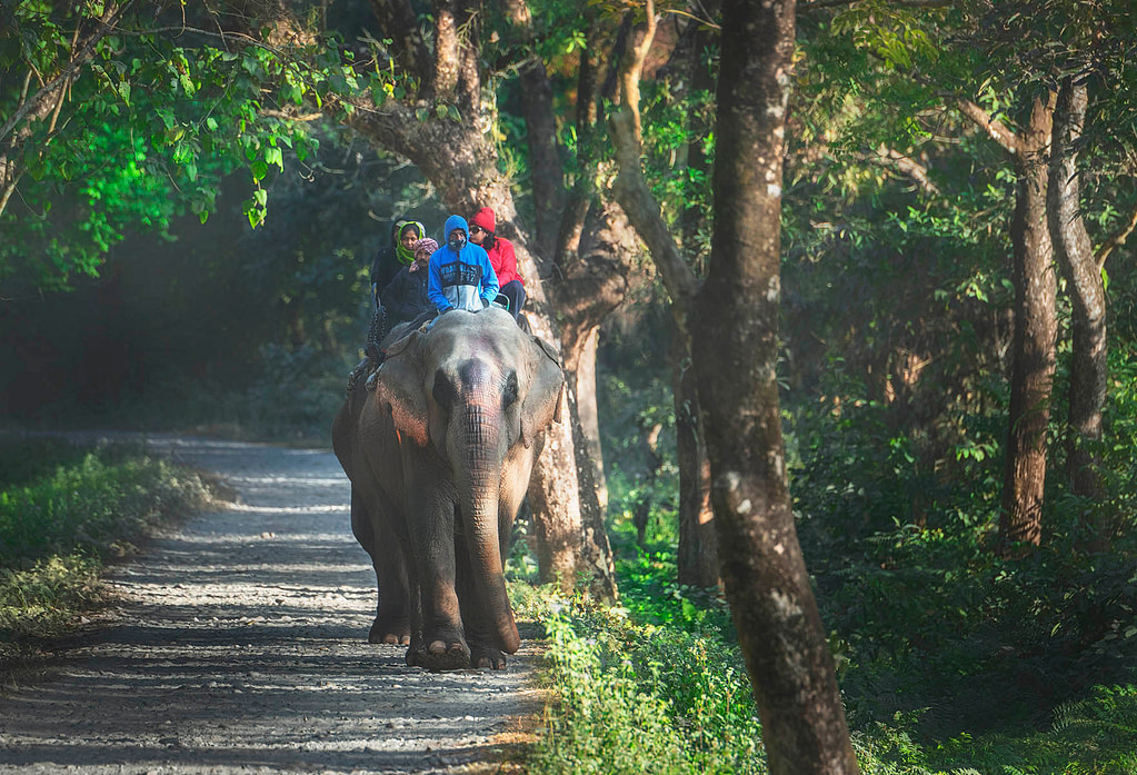 Elephant Safari in Manas National Park