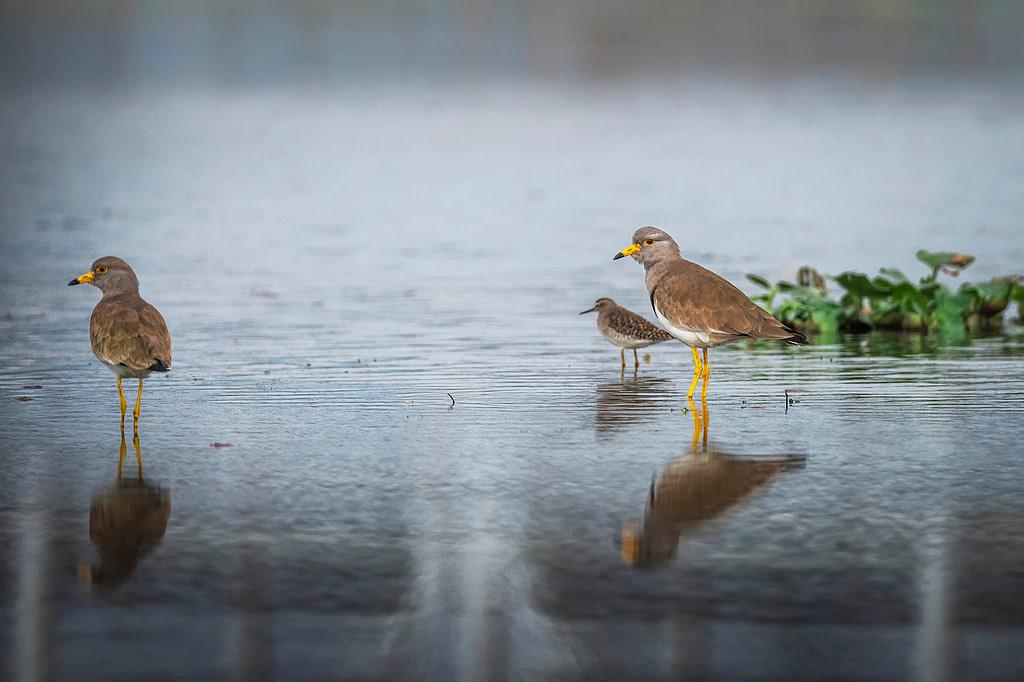 wetlands of Assam