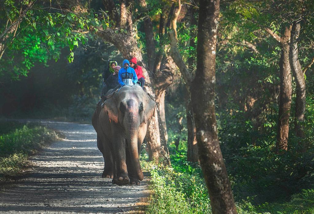 Elephant Safari in Manas National Park